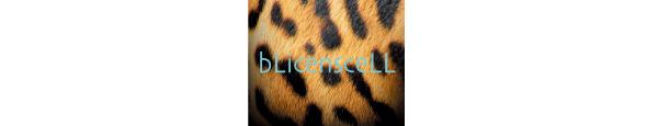 BLicensceLL(ブリスンセル)